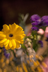 Yellow Flower-Lensbaby- (theBABSY) Tags: flowers lensbaby daisies