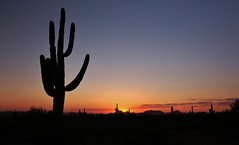 Phoenix Sunset (Photography Peter101) Tags: sunset arizona cactus nature sunrise canon