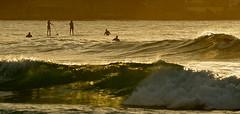 She Who Must Be O'Waved (rosiebondi) Tags: ocean beach bondi sunrise australia paddler