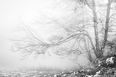 (Mimadeo) Tags: morning trees light blackandwhite white mist black nature wet leaves misty fog mystery forest landscape leaf scary haze branch gloomy natural ominous magic foggy creepy foliage fairy fantasy bark ethereal mysterious horror trunk mystical nightmare unreal hazy magical twisted murky beech