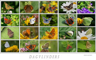 Dagvlinders /Butterfly