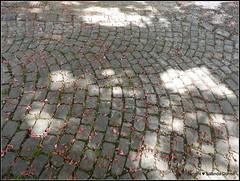 "Kopfsteinpflaster (Bsetzistei) (Jolanda Donné) Tags: kopfsteinpflaster ""bsetzistei"" pflastervlatemplastrum strasenundwegebau mai mai2015 7052015 nikoncoolpixp610"
