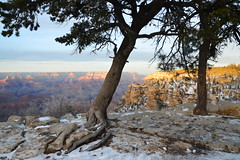 Grand Canyon 98 (Krasivaya Liza) Tags: grandcanyon grand canyon national park canyons nature natural wonder az arizona holiday christmas 2016 snowy winter cliffs cliffside edgeofcliff