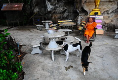 ,, No Cone 2-Tone ,, (Jon in Thailand) Tags: street streetphotography streetphotographyjunglestyle junglestreetphotography monk dog dogs k9 k9s 2tone booboo jungle colors cone cementtable tails birdcage 2tonethenocones littledoglaughedstories