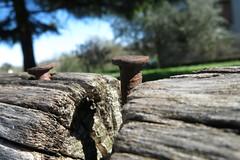 RUST FLICKR FRIDAY (carloancona) Tags: flickr friday rust