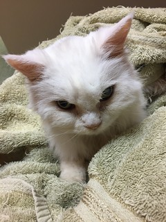 Pearl's last picture (Pearl Cat, 2001?-2017)