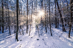 Can You Hear the Wind in the Trees? (crmanski) Tags: crescentlake landscape southingtonct winter hiking snow