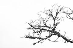 Sorrow (rqserra) Tags: bw pb pretoebranco blackandwite minimal minimalism minimalismo minimalist rqserra brazil