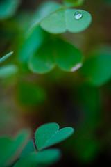 Layers (Deepak Kaw) Tags: heart layers color composition digital drop droplet depthoffield bokeh beautiful green nikon nikond610 macro art artistic