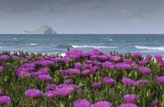 Flores en la manga del mar Menor. Isla Grosa al fondo. (mignik55) Tags: viento murcia lamanga marmenor playa olas sal agua primavera mar flores mediterráneo
