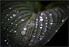 Sony NEX7 with Leica Macro-Elmarit-R 60/2.8 (Dierk Topp) Tags: leica 60mm wassertropfen nex7 leicamacroelmaritr6028