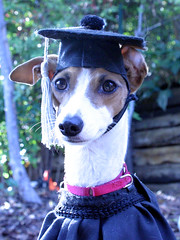 """Audry diploma SBK9U • <a style=""""font-size:0.8em;"""" href=""""http://www.flickr.com/photos/95808399@N03/8990016770/"""" target=""""_blank"""">View on Flickr</a>"""
