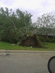 tornado uprooted tree (USAimages) Tags: tree tornadoe