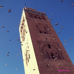 The Birds (MagalieP) Tags: birds nikon raw morocco marrakech d90 lakoutoubia