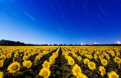 061813_SunflowerStartrail (Mike Mezeul II Photography) Tags: sky moon night stars landscape nikon texas allen sunflower startrail mezeul