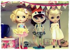 dolly shelf today.