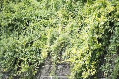 20130719-_DSC7820 (Fomal Haut) Tags: walking nikon  80400mm d4     sanpocamera