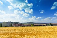 Farbenpracht (Stefan Zwahlen) Tags: summer nature field clouds canon landscape switzerland colorful wheat sigma sunny bluesky crops colourful 8mm berne schliern