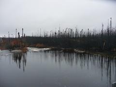 After the Fire/ Ce qu'il reste... (anng48) Tags: canada river quebec rivers forestfire fires qc feu cotenord feudeforet baiejohanbeetz
