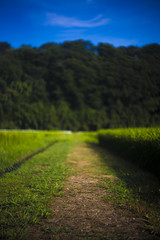 A path to the forest (mijabi) Tags: summer japan canon 50mm f18 夏 kanagawa s21 6d angenieux 神奈川 アンジェニュー 八菅山