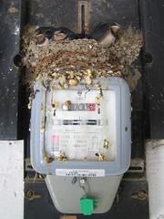 Lastavići | Swallows