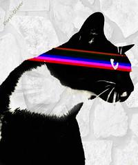 KITTYY-5=2 (Derek Dees) Tags: art foto oliver derek gato dees kitty5 ipiccy