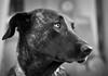 Mola (tolltroll11) Tags: dogs hunde bardino