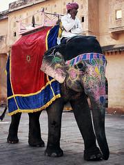 Bunt geschmückt. Elefant für Tourist_innen.