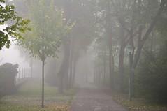 Udu pargis (anuwintschalek) Tags: park autumn trees fog landscape austria october nebel path herbst lantern laterne bume niedersterreich latern puud rada stadtpark weg pfad sgis udu wienerneustadt 2013 pargitee