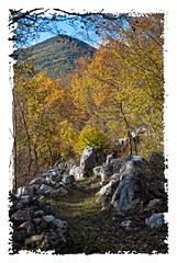 Sentiero (Sergio Verrecchia - Digital Imaging Technician) Tags: autumn italy mountain stone alberi nikon rocks sentiero albero rocce autunno montagna molise mulattiera filignano nikond40x collemacchia sergioverrecchia