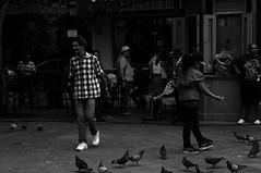 Walking (Elisas caramel) Tags: street old bw white black streets walking puerto photography photo san juan feeding rico short pr palomas stories doves streetshot caminando alimentando elisascaramel