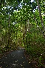 DSC_8640 (Nikosan Photographie) Tags: usa florida unitedstatesofamerica everglades evergladesnationalpark floride etatsunis
