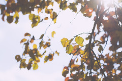 IMG_7716 (chrislikespictures) Tags: statepark trees ohio sky sun fall nature leaves glare branches lensflare lewiscenter alumcreek leaveschangingcolor