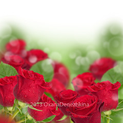 red roses (Oxana Denezhkina) Tags: wedding red roses summer wallpaper white plant abstract flower color macro green art texture love nature floral beautiful beauty up rose closeup garden spring amazing flora day pattern close blossom background decoration valentine romance petal celebration passion bloom romantic bouquet elegant