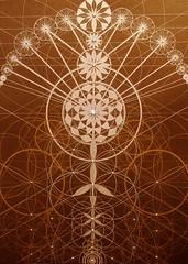 A Menina dos Meus Abraos (Original Version) (joma.sipe) Tags: art geometric arte geometry mandala dos sacred geometrical spiritual occult meus menina sagrada mystic gnosis visionary esoteric espiritual joma geometria mandalas theosophical mysticism oculto geomtrica theosophy sipe theosophie abraos a esotrico teosofia visionria jomasipe