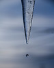 Thawing icicle (Delia Seeberg seebergphotography.com) Tags: gapersblock chicagoist elementsorganizer