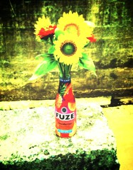 the energy of color (LauraSorrells) Tags: flowers color yellow bottle colorful jasper farmersmarket vivid colorplay