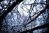Freezing Rain 2 (The Girl Who Killed The Internet) Tags: winter ice rain weather forest canon russia sinister freezing krasnodar freezingrain harshweather