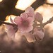 "Peach Blossom Curve • <a style=""font-size:0.8em;"" href=""https://www.flickr.com/photos/67363961@N00/13207573894/"" target=""_blank"">View on Flickr</a>"