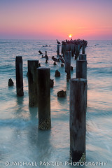 Sunset at the Old Naples Pier (Michael Pancier Photography) Tags: sunset beach pelicans gulfofmexico us unitedstates florida naples pylons commercialphotography naturephotographer naplesbeach michaelpancierphotography landscapephotographer fineartphotographer 3rdavenuesouth michaelapancier gulfbeaches oldnaplespier wwwmichaelpancierphotographycom