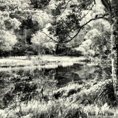 Reflection on Nature (Elise Arod) Tags: abstract reflection art nature water monochrome landscape nationalpark sydney cellphone australia smartphone dreamy aviary wilderness android htc phonephotography instagram