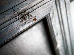 Prospering Virtue Scar, Changdeokgung Palace (), Seoul, South Korea (camilleduponteil) Tags: door travel asia virtue palace korea east seoul palais porte scratch cicatrice changdeokgung  prospering eraflure   donggwol erafle