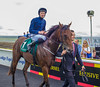 """Curragh 9.8.2015 060 • <a style=""""font-size:0.8em;"""" href=""""https://www.flickr.com/photos/75346790@N07/20264500160/"""" target=""""_blank"""">View on Flickr</a>"""