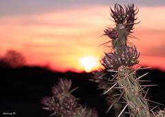 Cactus (nancaromea) Tags: cactus sunset arizona phoenix apachetrail hiking