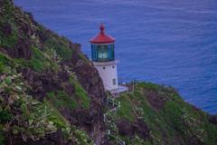 IMG_3527 (mnuckols3485) Tags: lighthouse coast sea ocean beach shore water cactus hawaii oahu makapuu trail hiking mountain