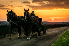 Old rider (Rick BoSS) Tags: old man hourse country carriage sunset light