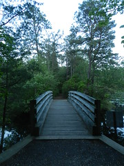 Along the Nature Trail (Christine_Ray) Tags: new pine forest state reserve national jersey pinelands barrens belleplain belleplaincapemayandparvin