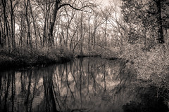 Death River (jayoaK) Tags: park blackandwhite bw white black forest canon river dead death woods state dreary t3i parvin