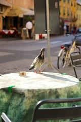 A table, J'ai faim (Napafloma-Photographe) Tags: italy vacances holidays italia pigeon pisa tuscany toscane italie vacanza pise 2013 campodelmiraculo