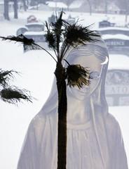 Overlap #21 (Frances Sousa) Tags: moon art doubleexposure surrealism mary surreal palmtrees mothermary
